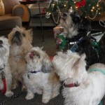 dogs around the christmas tree at the Victoria hotel